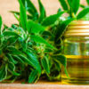 registro cannabis medicinal tornquist