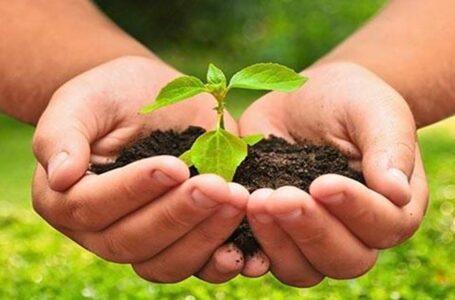 ¿Cuáles son los diez principios de la agroecología?
