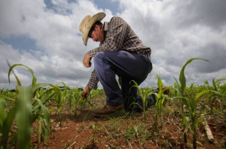 Tarjeta Procampo: Banco Provincia beneficia al agro con $7.000 millones para financiamiento a tasa 0