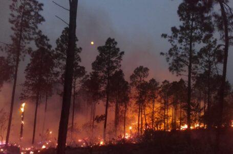 Incendios en la Argentina