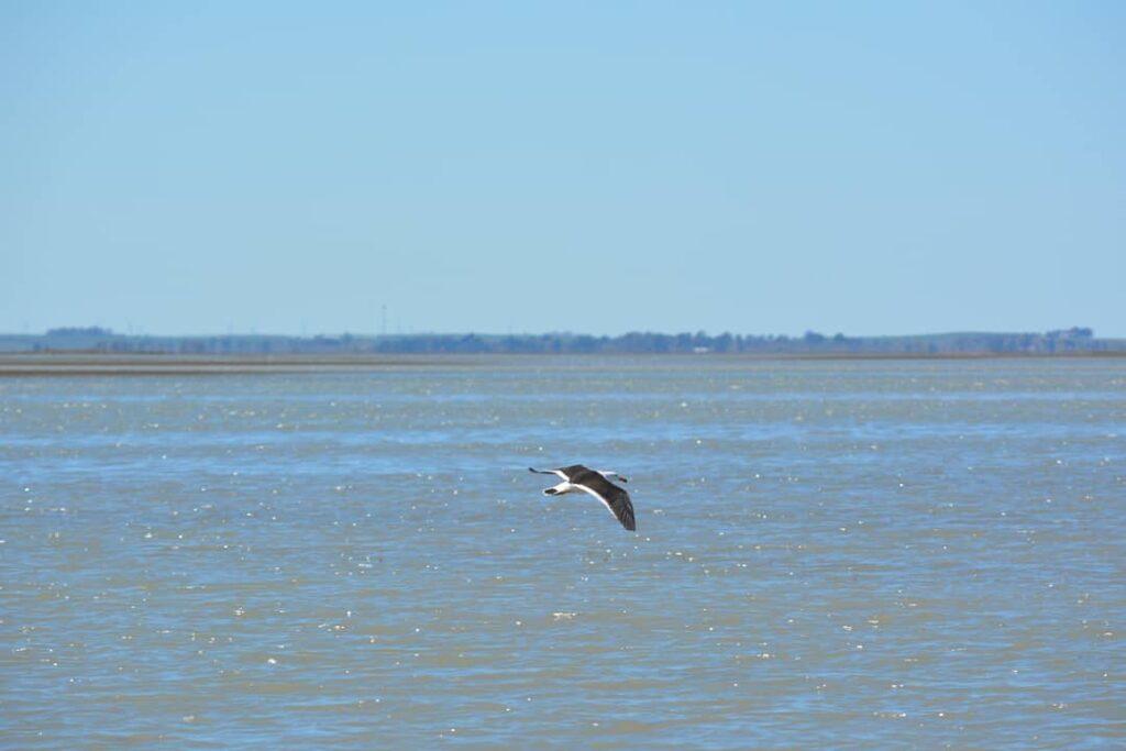 Biodiversidad en el estuario de Bahía Blanca