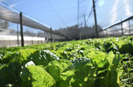 Agroecología en Bahía Blanca: presentaron un proyecto de creación del Sistema Participativo de Garantías